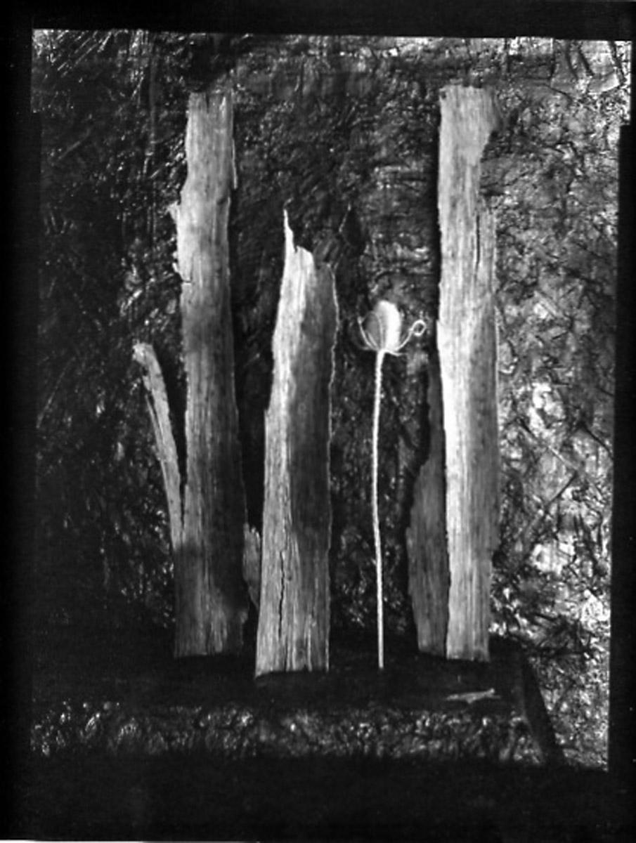 carol-marc-lavrillier-photo-suaire-terre-chardon-105